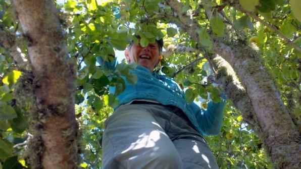 santa-cruz-fruit-tree-project_8_8-26-12