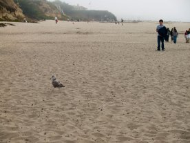 coastal-cleanup_6_9-15-12