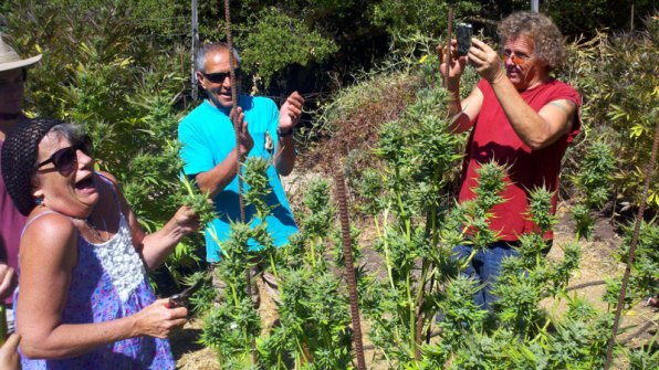First Harvest of 2012 for WAMM