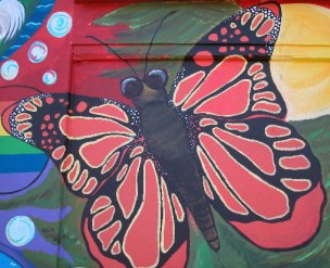 Monarch Butterflys spend time in Santa Cruz