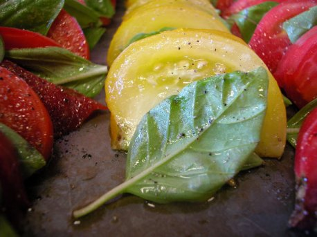 tomato-basil_7-10-04