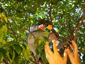 Steve Schnaar Tosses an Orange