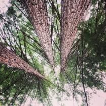 Redwoods at Fall Creek