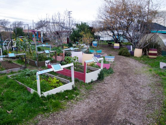 Garden beds at the Chinatown Community Garden in Salinas are adopted by residents of the neighborhood and organizations. Each person or organization who adopts a bed takes care of and receives the bounty of their own harvest.