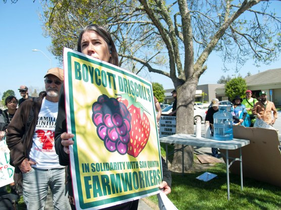 Boycott Driscoll's in Solidarity with San Quintín Farmworkers