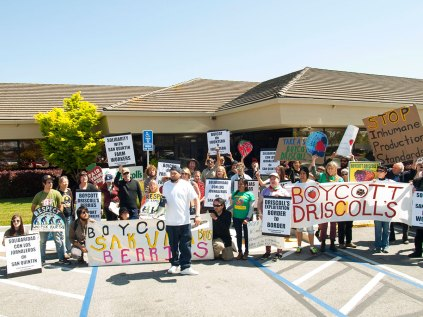 Boycott Driscoll's at Driscoll's Headquarters in Watsonville