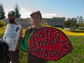 Costco Drop Driscoll's!