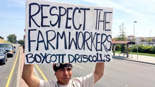 Respect the Farmworkers Boycott Driscoll's