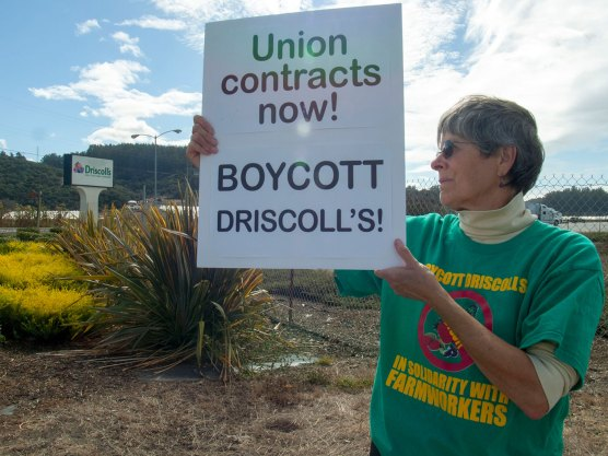 Union contracts now! Boycott Driscoll's