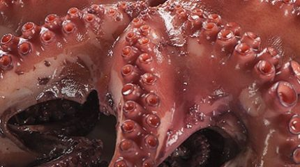 octopus-whole