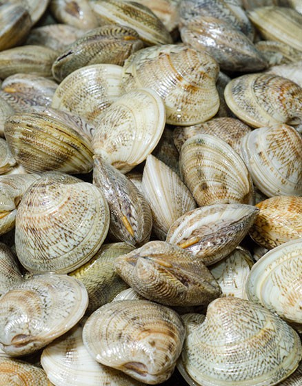 Clams in whole Shell
