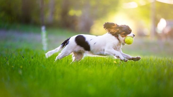 garantir saúde do pet dias quentes