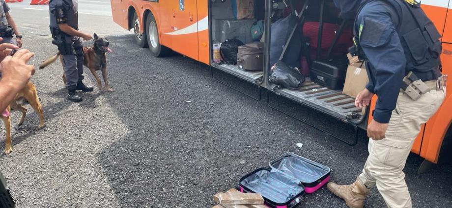 PRF e BAEP prendem mulher transportando maconha em ônibus