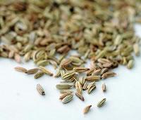 I semi dell'anice (Pimpinella anisum L.)