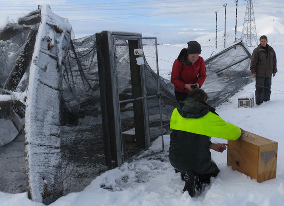 2015 snowstorm collapses one of the aviaries in Twizel.