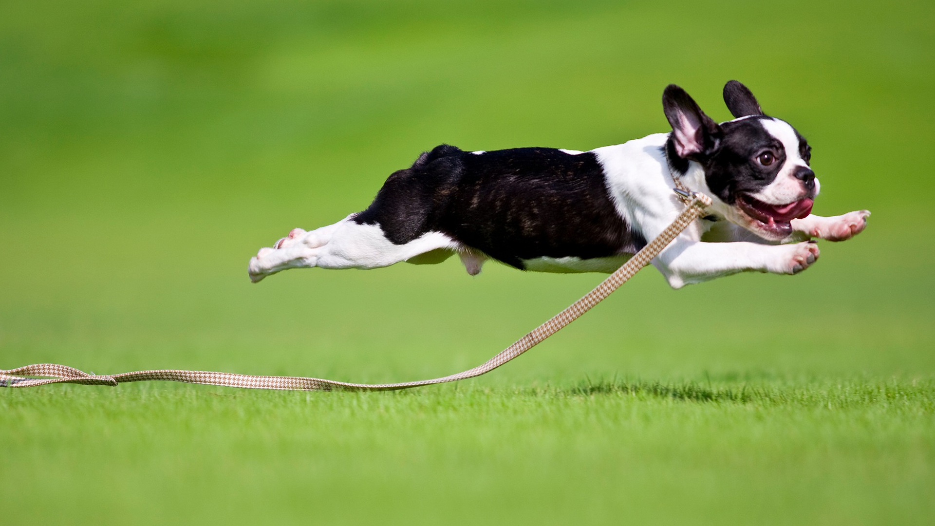 Does Your Dog Ever Start Running Around Like Crazy It S Called The Zoomies And Dogs Do It For A Reason,Cheapest City To Buy A House In Arizona