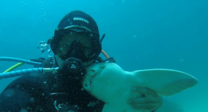 Shark Recognizes Diver Whenever He Comes Down To See Her And Begs To Be Cuddled