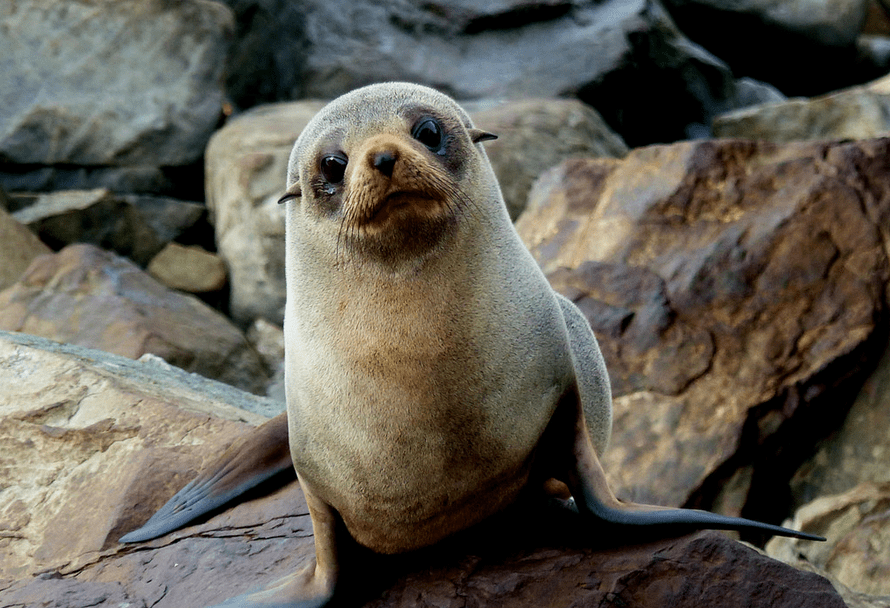 Scientists find USB stick while studying seal poop and it oddly works