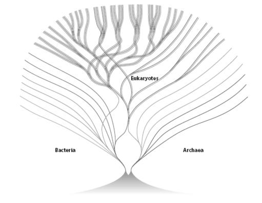 bill martin tree of life