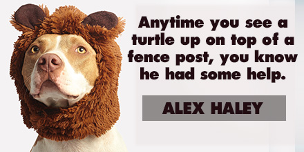 Alex Haley inspirational quote