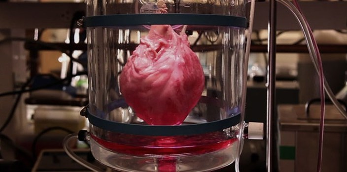 how-to-build-a-beating-heart