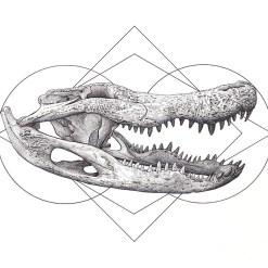 Gator Skull