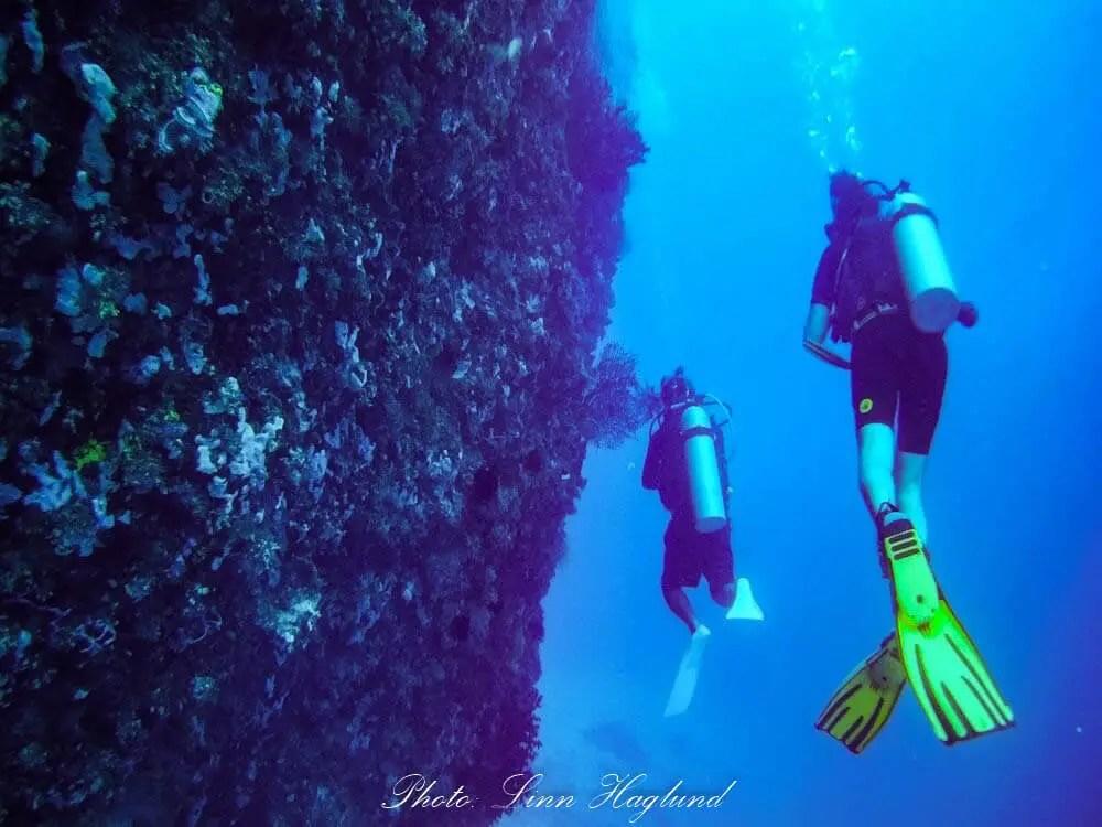 Wall dive off Alona beach