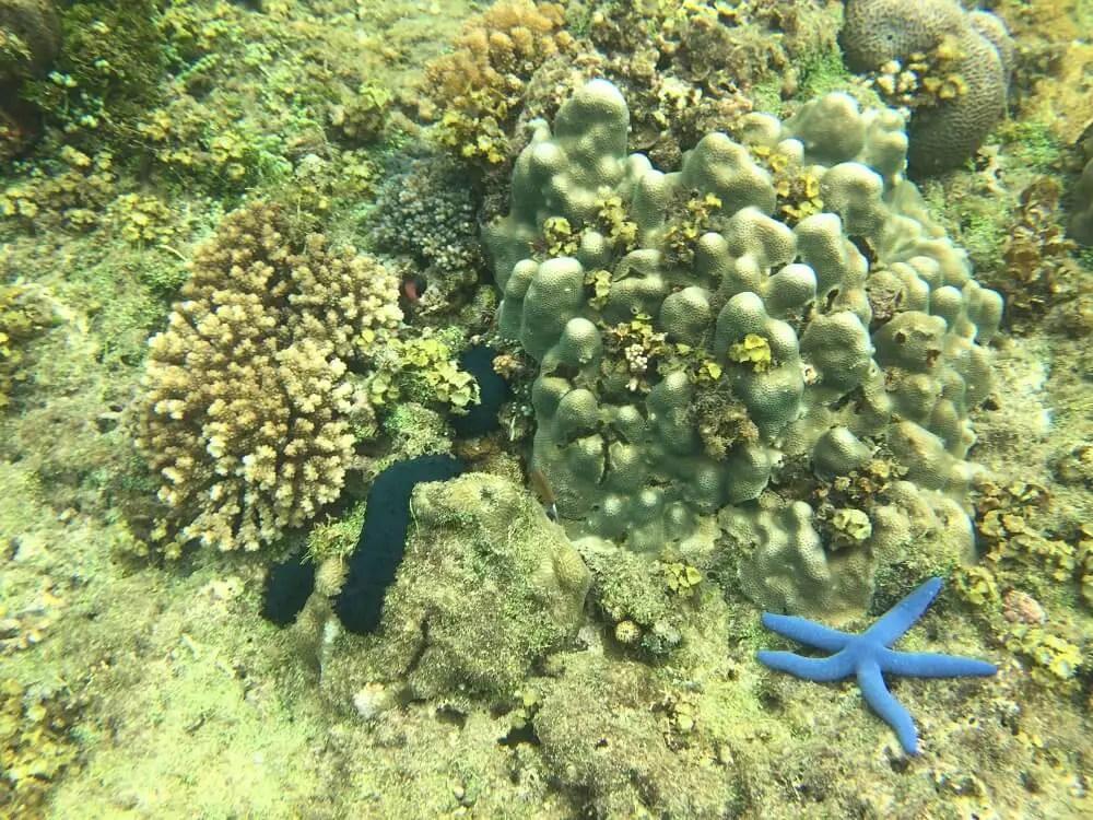 Snorkeling at Balicasag island