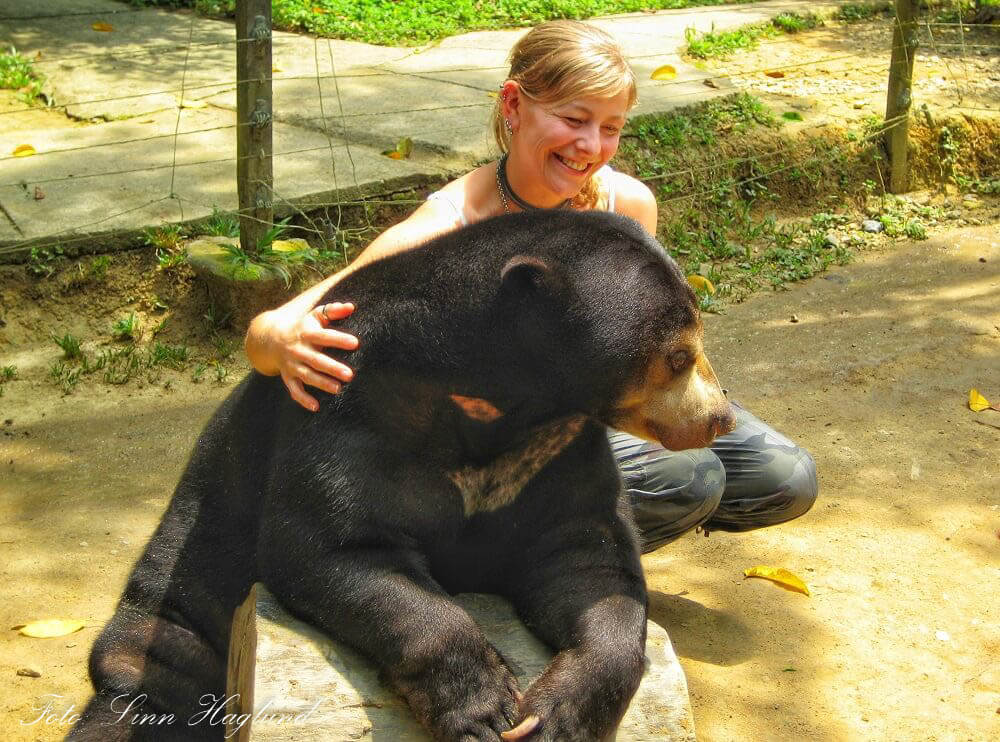 A Malaysian Sun Bear in a zoo in Malaysia that was included in the tour. Why didn´t I wonder how the poor bear just let me cuddle it?