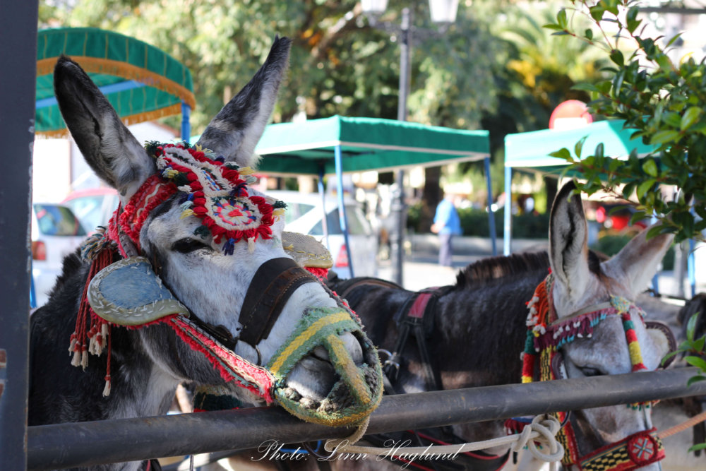 Mijas Donkey Taxi - Why you should never go for a ride