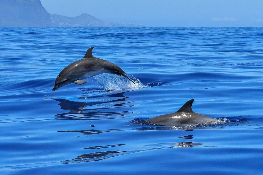 Dolphins playing around the boat