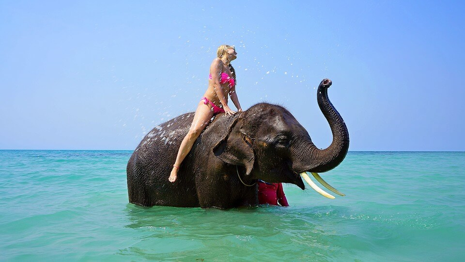 It is unethical to ride elephants