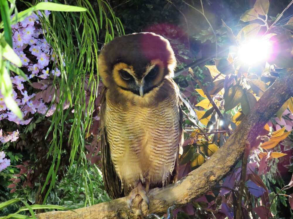 Owl cafes are part of Japan's unethical animal tourism