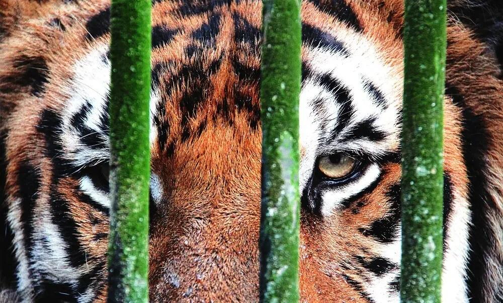 Yangoon Zoo - Photo by Shutterstock