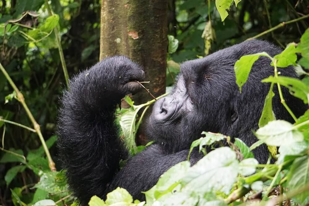 Rwanda is one of many off the beaten pat travel destinations