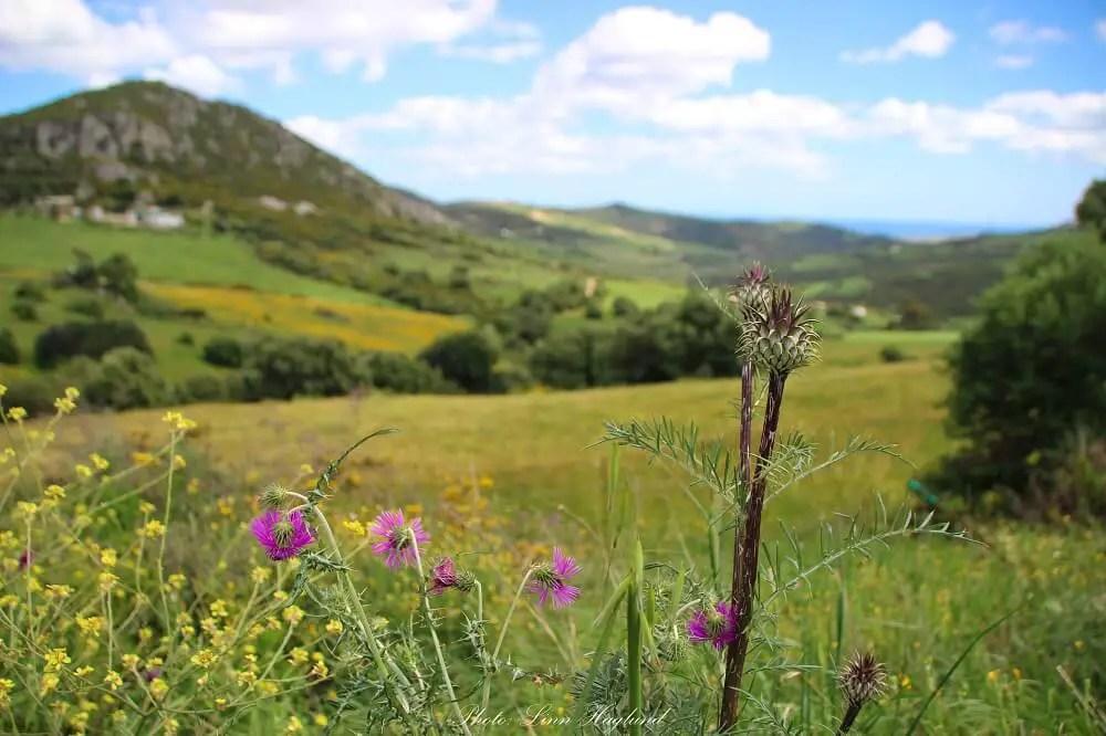 Fields off the beaten path in Spain