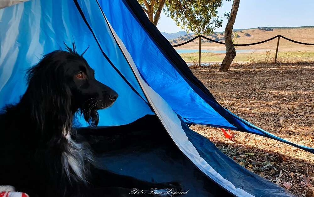 Ayla testing out the best tents for dogs
