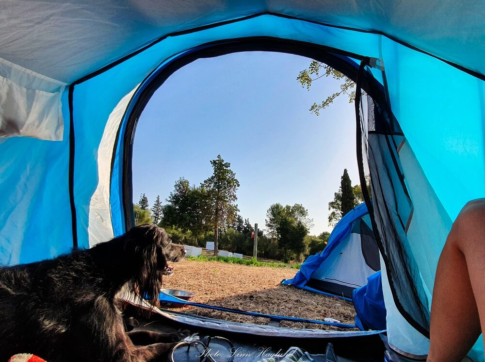 How to find pet friendly tents