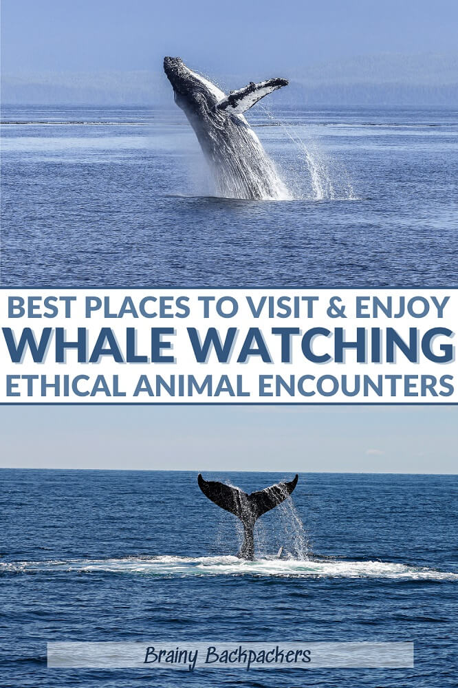 Are you looking for the best places to go whale watching in the world? I've got you covered with these amazing whale wathing destinations all around the world including tips for ethical whale watching so you know what to look for when choosing an operator.