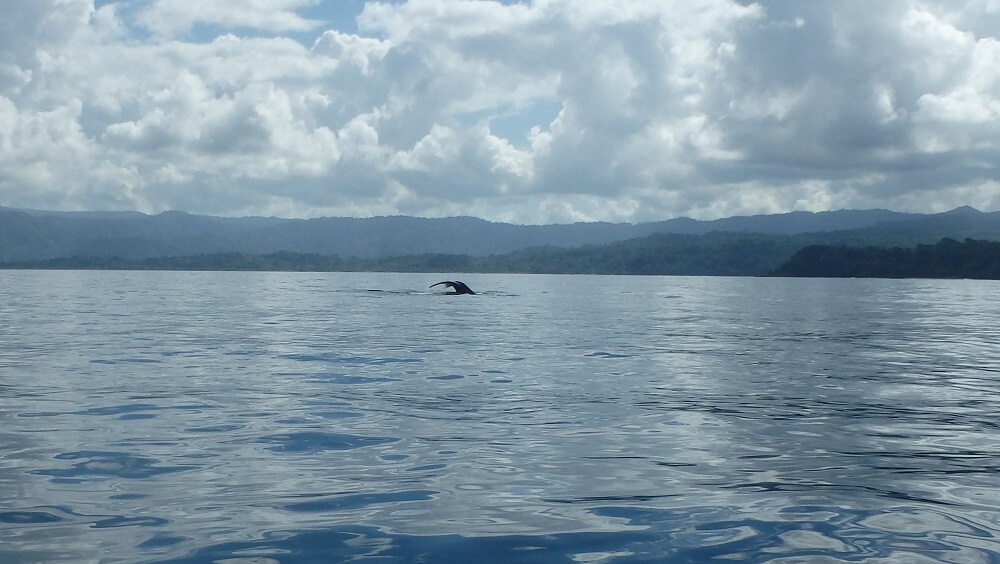 Whale watching in Corcovado Costa Rica