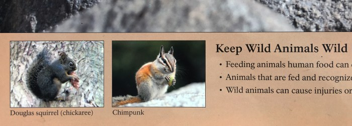 "National Park Service sign with a spelling error - ""chimpunk"""