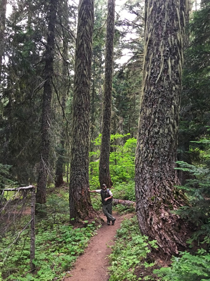 "Michael standing on the Sleeping Beauty Trail surrounded by firs covered in lichen ""beards"""