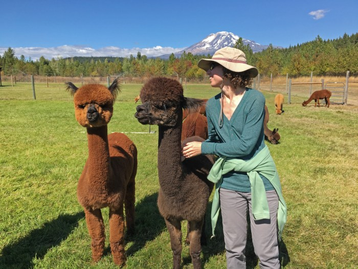 Christina attempting to hug an Alpaca