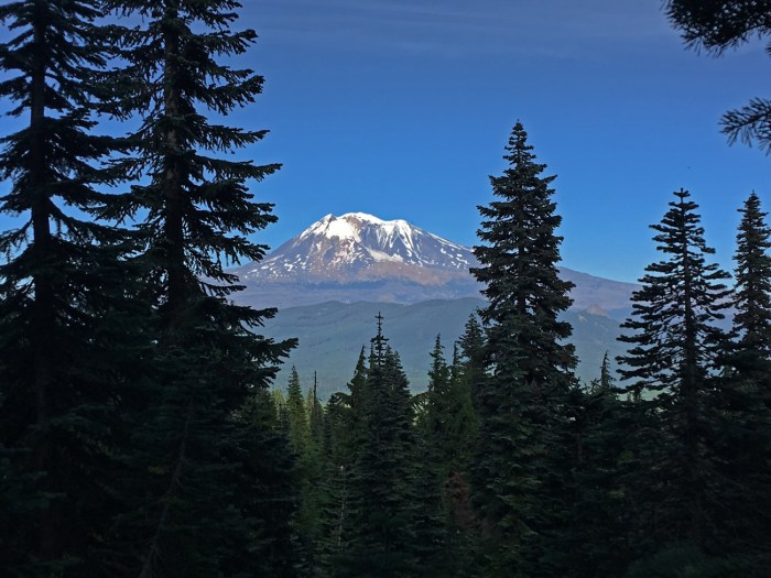 A view of Mt. Adams from Cultus Creek Trail with silhouetted firs in the foreground
