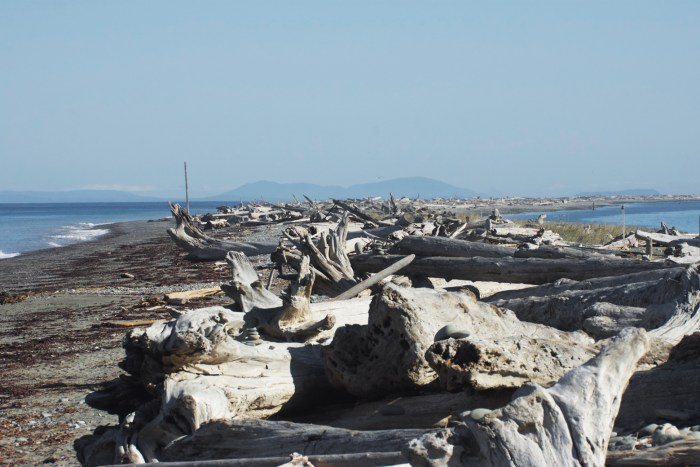 View looking straight down the Dungeness sand spit with the driftwood piled on top and the Strait of Juan de Fuca in the distance