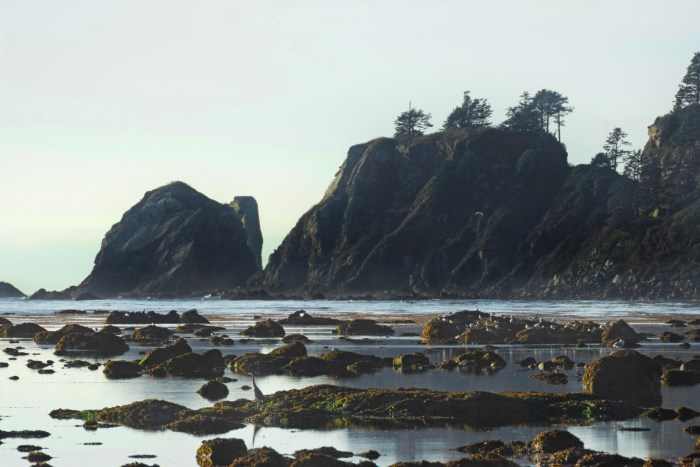 Tidepools, rocks with a great blue heron and gulls, and a sea stack off the coast of Cape Alava