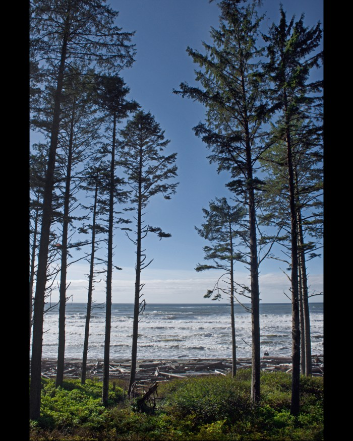Ruby Beach with the thin row of conifers lining the edge of the beach in the foreground