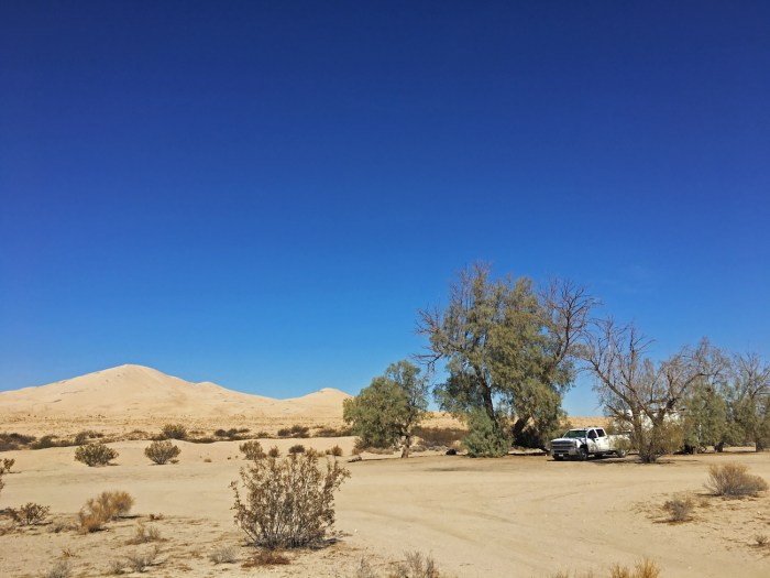Our truck and trailer under the tamarisk trees at Kelso Dunes
