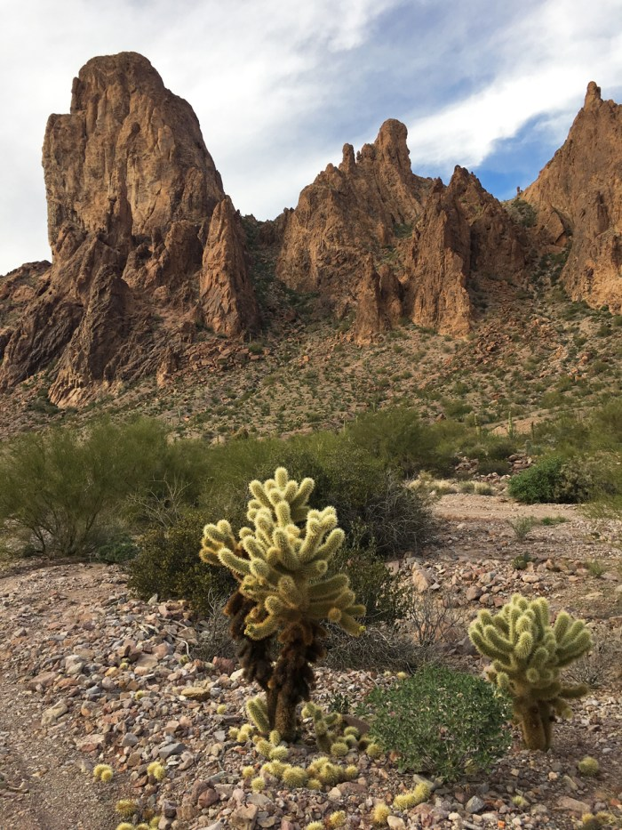 """Teddy bear"" cholla with rock formations in the background in Kofa Queen Canyon"