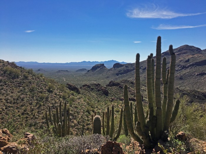 Organ pipe cactus and expansive view of desert peaks and valleys